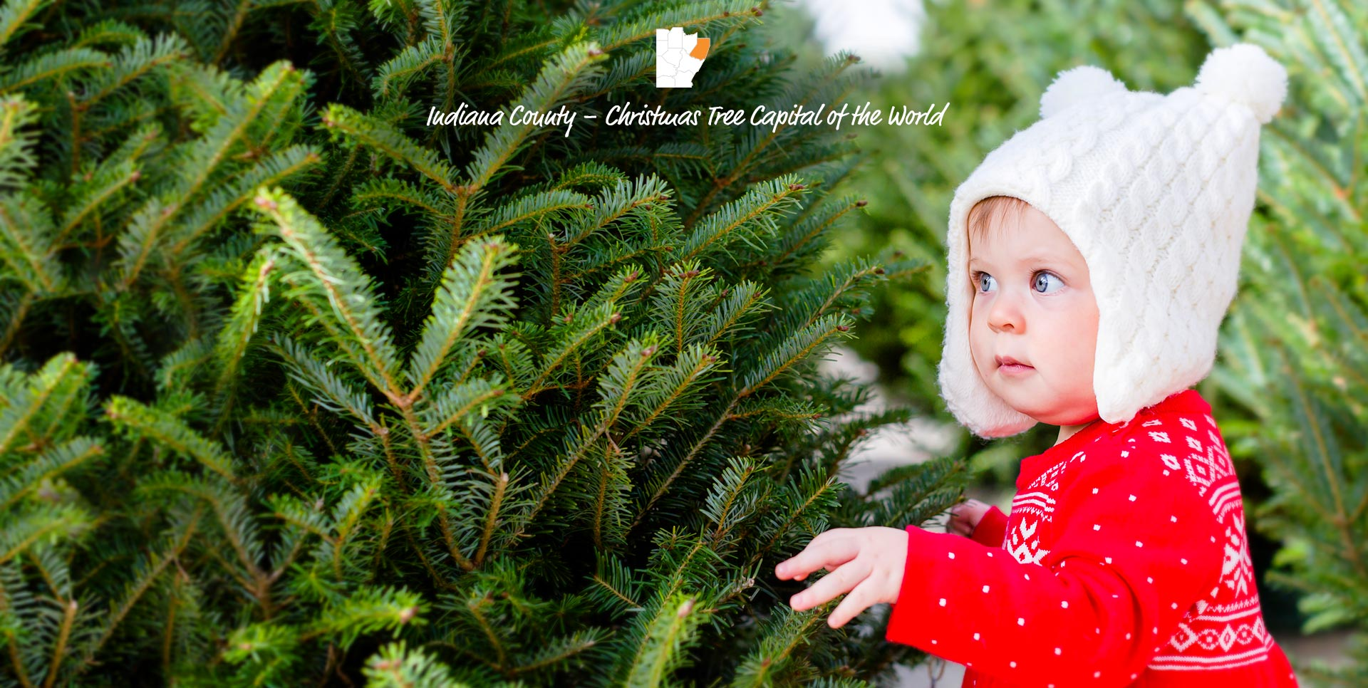 Indiana County – Christmas Tree Capital of the World